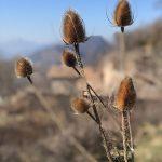 Ruta circular: Pernau-Sant Grau-Corones-Serrat dels Llamps-Refugi de Saltor